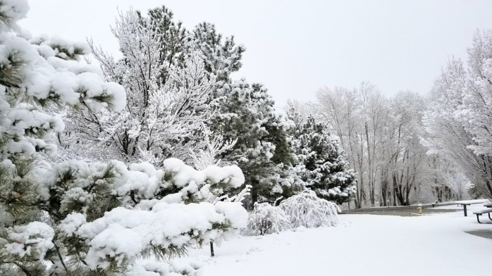 winter photo 5