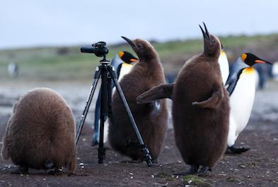 Falklands 1
