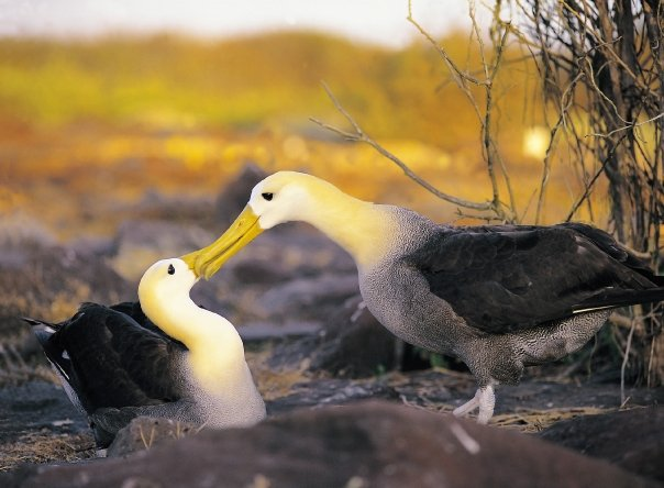 Galapagos 3