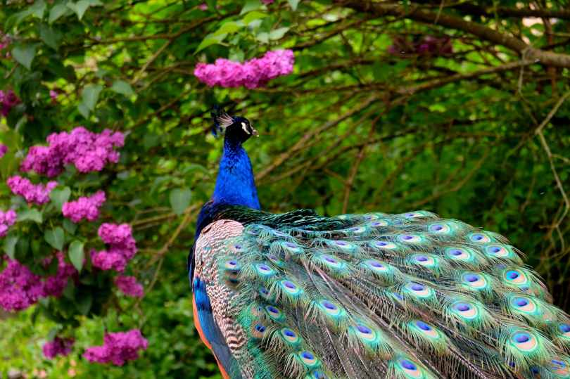 animal beautiful bird blue