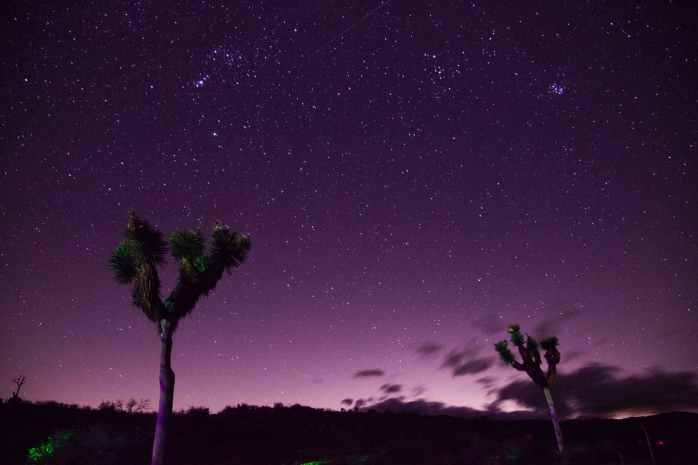 two trees under purple sky