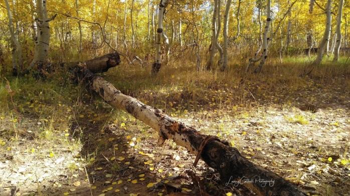fallen tree-1524114233641