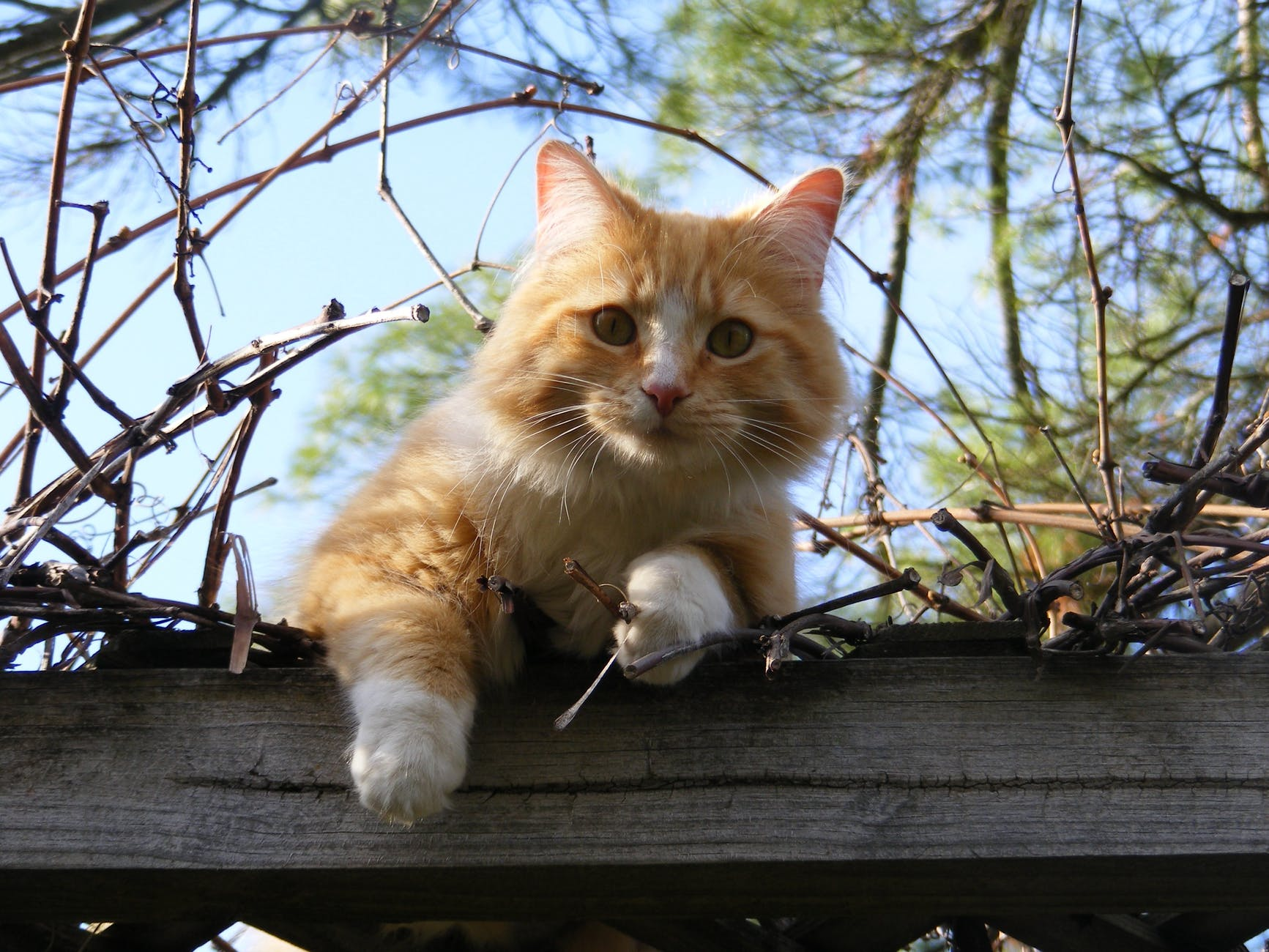 low angle portrait of cat on tree against sky