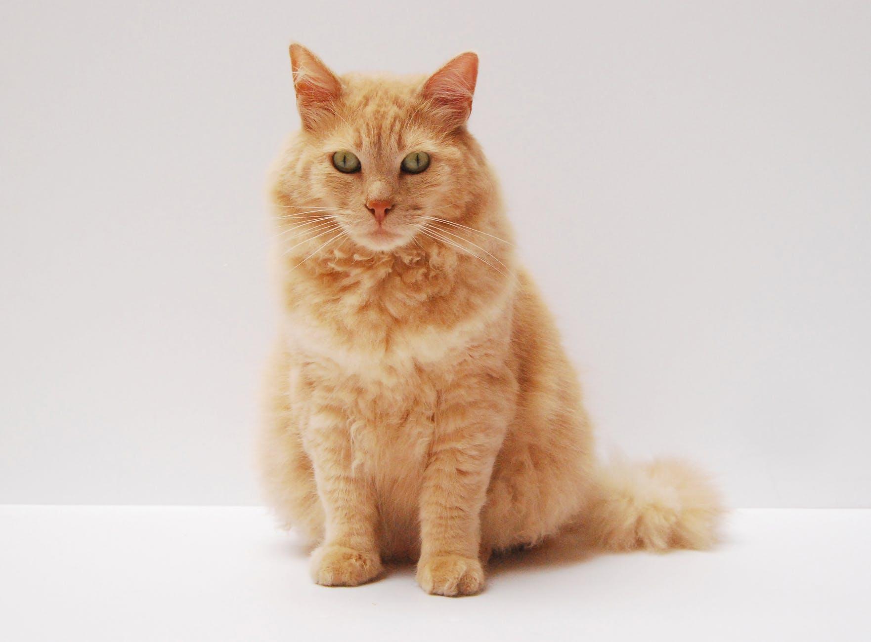 adorable animal animal photography cat
