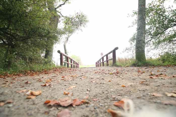 autumn bridge daylight fall