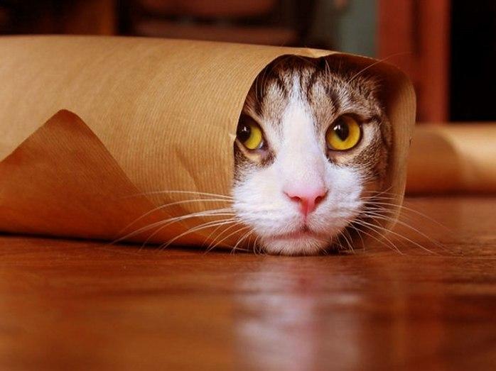 cat funny 1