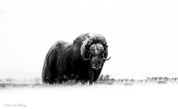 May Lise Blikeng - Foto Arte Black and White